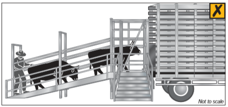 Do not allow a person to load cattle from inside the ramp. The ramp must also not allow a person to place limbs through bars